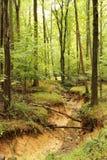 Ein Nebenfluss durch einen Wald Lizenzfreies Stockbild