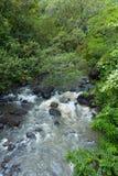 Ein Nebenfluss entlang der Straße zu Hana Maui Hawaii lizenzfreies stockbild