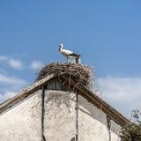 Ein Nest von Störchen auf dem Dach eines Wohngebäudes Lizenzfreies Stockfoto