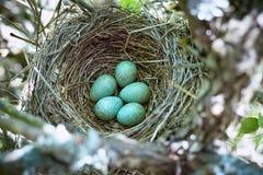 Ein Nest von Vögeln auf einem Baum im wilden Stockfotografie