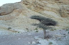 Ein Netafim, Israel. Ein Netafim, beautiful place near Eilat, evening twilight Royalty Free Stock Image