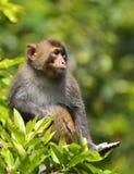 Ein netter Affe, der in der Niederlassung sitzt Stockbilder