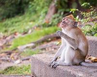 Ein netter Affe lebt in einem Naturwald von Thailand Stockbild