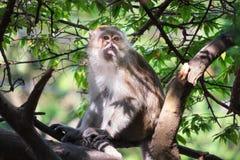 Ein netter Affe lebt in einem Naturwald von Thailand Stockfotografie