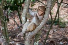 Ein netter Affe sitzt auf einer Niederlassung, kaut ein Blatt und untersucht die Kamera, Leben in einem Naturwald von Thailand Stockfotografie