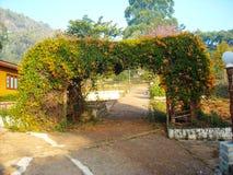 Ein netter Garten mit Palmen und Blumen Lizenzfreies Stockfoto