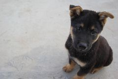 Ein netter Hund Stockfoto