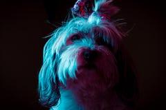 Ein netter Hund, der für die Kamera aufwirft lizenzfreie stockfotos