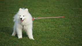 Ein netter Hund in einem Park Lizenzfreies Stockfoto