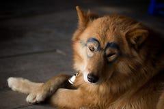 Ein netter Hund mit der Sonnenbrille gemalt stockfotos