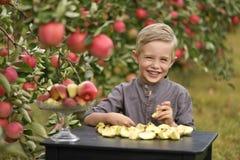Ein netter, lächelnder Junge wählt Äpfel in einem Apfelgarten aus und hält einen Apfel lizenzfreies stockfoto