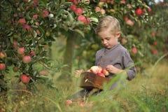 Ein netter, lächelnder Junge wählt Äpfel in einem Apfelgarten aus und hält einen Apfel stockfoto