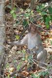 Ein netter langschwänziger Makakenaffe in einem tropischen Wald bei Chonburi, Thailand Lizenzfreies Stockfoto