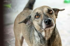 Ein netter streunender Hund Stockfotos