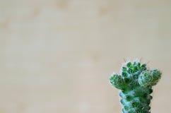 Ein netter vibrierender grüner Mini Cactus Plants Stockbilder