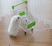 Ein netter Winter-weißer Zwerg-Hamster, welche nach Nahrung für Haustiere auf dem leeren Miniaturwarenkorb sucht lizenzfreies stockbild