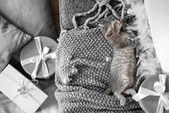 Ein nettes graues Kätzchen liegt auf einem grauen Plaid in einer Weihnachtsdekoration stockfotos