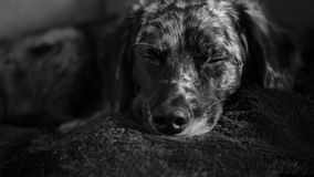 Ein nettes Hundeschlafen Lizenzfreie Stockbilder