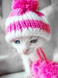 Ein nettes kleines Kätzchen in einer rosa Strickmütze mit Pompomsblicken auf etwas Stirnrunzeln Nette kleine Miezekatze im Hut au lizenzfreies stockfoto
