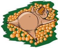 Ein nettes Schwein liegt in einem Haufen von Orangen Stockfotografie