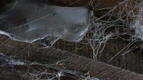 Ein Netz auf der Decke in einem Holzhaus Alte Scheune mit Spinnennetzen und Spinnen stock video
