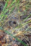 Ein Netz mit Tautropfen Stockbilder