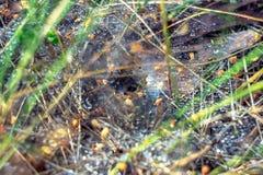 Ein Netz mit Tautropfen nach dem Regen Stockbilder