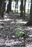 Ein neuer Baum, der unter altem wächst Lizenzfreie Stockbilder