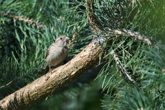 Ein neugieriger Vogel auf der Niederlassung lizenzfreie stockfotografie