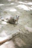 Ein neugieriges Eichhörnchen Lizenzfreie Stockfotografie