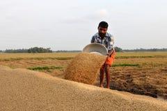 Ein nicht identifizierter Landwirt engagiert sich in den Jobs nach der Ernte auf den Reisgebieten stockfoto