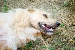 Ein nicht-reinrassiger verlassener Hund liegt aus den Grund stockfoto