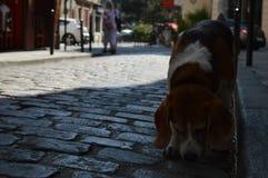 Ein obdachloser Hund Stockbild