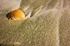 Ein Oberteil auf dem Mittelmeerstrand in Zypern, Muschel auf der Küstenlinie eines Urlaubsziels lizenzfreies stockfoto