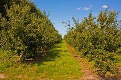 Ein Obstgarten in Pluckley Lizenzfreie Stockfotos