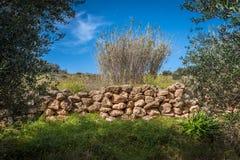 Ein Olivenhain nahe einem Wasserstrom stockfotografie