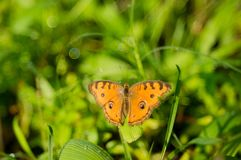 Ein orange Schmetterling mit Blase bokeh stockbild