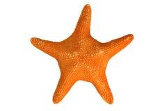 Ein orange Starfish Lizenzfreies Stockfoto
