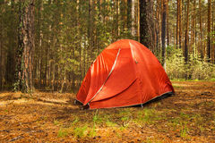 Ein orange Zelt in einem Wald an einem sonnigen Tag nach Regen Lizenzfreie Stockfotografie