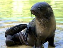 Ein Otter Stockbilder