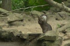 Ein Otteressen Stockbild