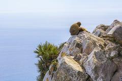 Ein Paar Affen, die auf dem Felsen von Gibraltar stillstehen Stockfotografie