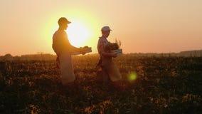 Ein Paar Bauernhöfe trägt Kästen mit Gemüse und Grüns entlang dem Feld Frisches organisches Gemüse vom Bauernhof lizenzfreies stockbild