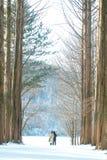 Ein Paar, das zwischen hohen Bäumen im Winter steht Stockbild