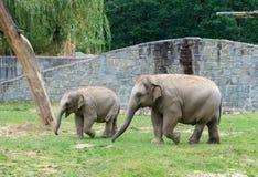 Ein Paar Elefanten, die im Zoo spielen lizenzfreie stockbilder