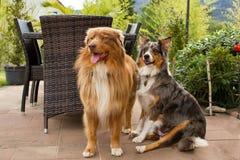 Ein paar hübsche Hunde Lizenzfreie Stockfotografie