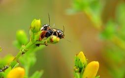 Ein Paar Insekten auf einem Blumenstiel lizenzfreie stockbilder