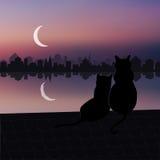 Ein paar Katzen auf dem Dach Lizenzfreies Stockfoto