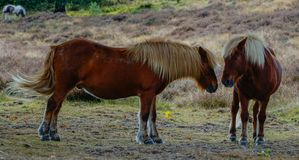 Ein Paar Pferde auf einer Wiese im Herbst Stockbild