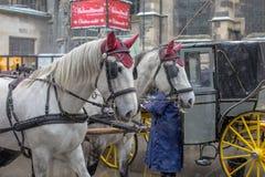 Ein Paar Pferde, die einen Wagen ziehen lizenzfreies stockfoto